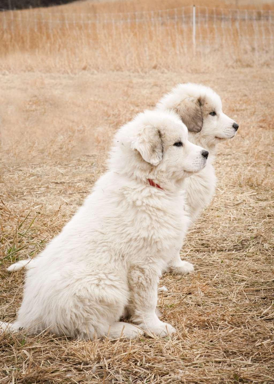Puppies111-min