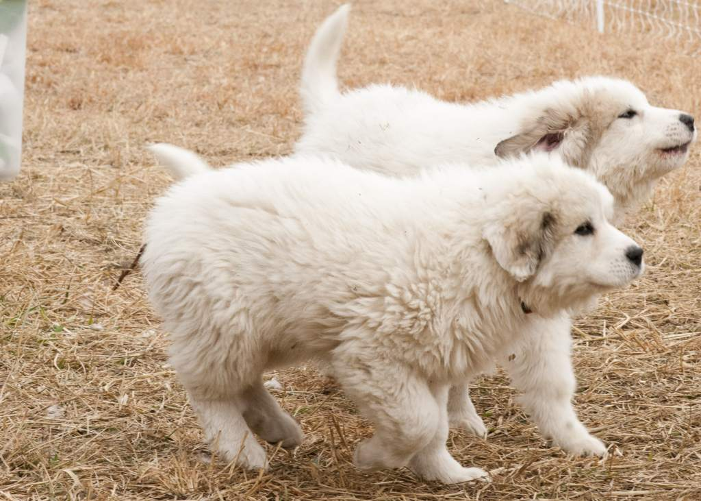 puppies457-min