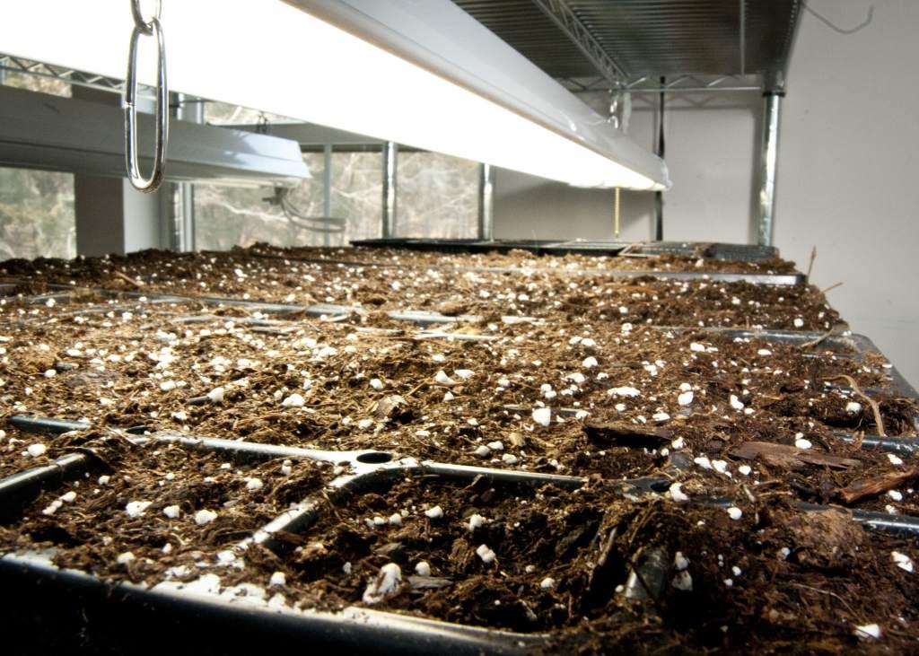 seed starting soil478-min
