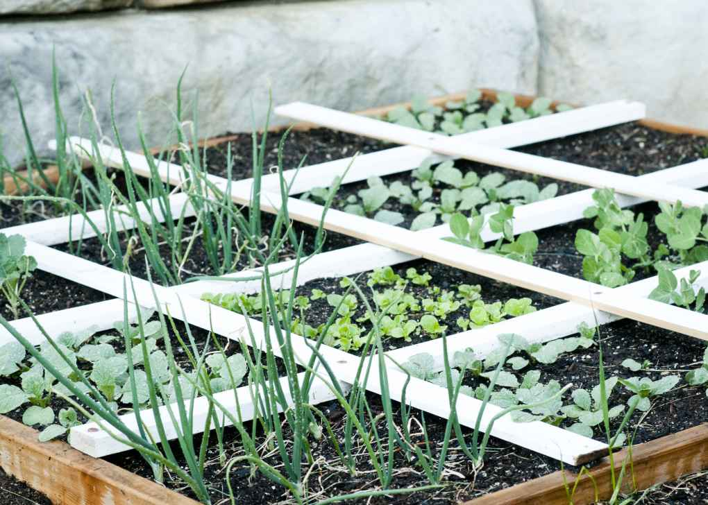 Kid's Veggie garden