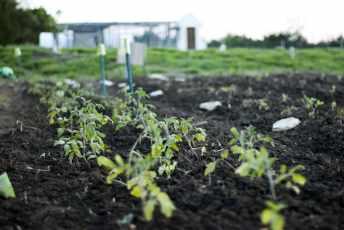 garden188-min