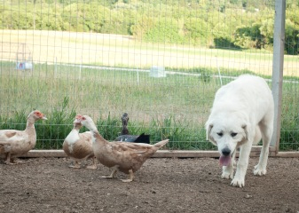 Pups in June234