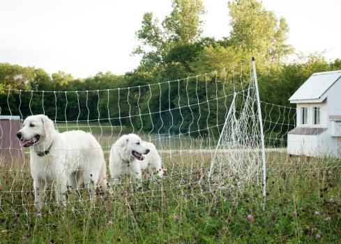 Pups in June236